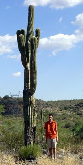 Riesen-Kaktus in der Wüste