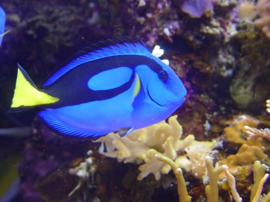 Fisch im Monterey Bay Aquarium