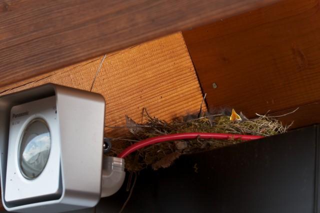 Vogelnest hinter der Webcam