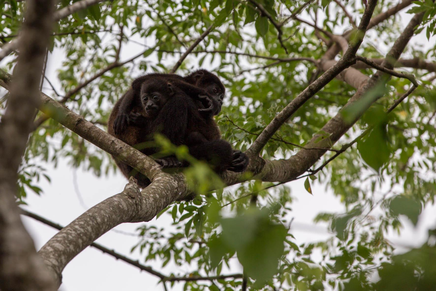 Affen am Parkplatz